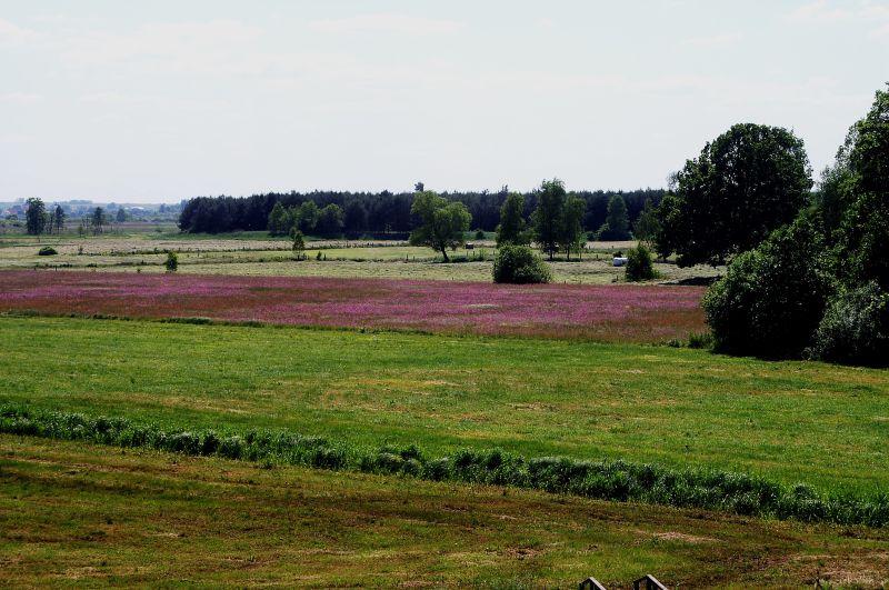 Okoliczne łąki